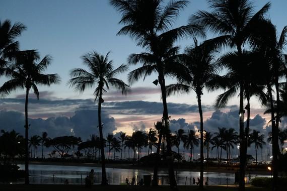 Palmtree_night2019