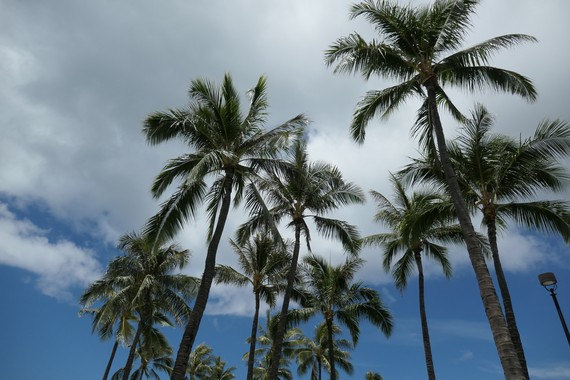 palmtree2019-2